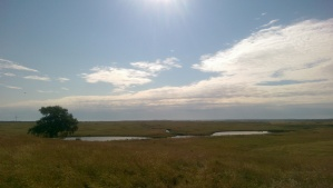 Elmley. Not a bad view