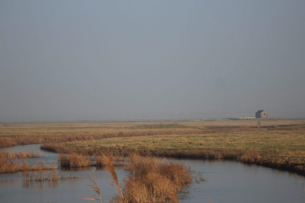 View over the marsh